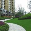 山西晋恒园林景观工程  草坪绿化