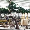 仿真植物盆景新中式室内客厅办公桌摆件酒店迎客松树实木根雕木艺